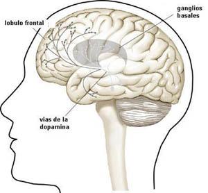 Que le pasa a tu cerebro cuando te masturbas