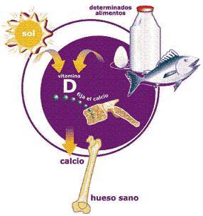 Imagen:20080805 mgb Vitamina D .jpg